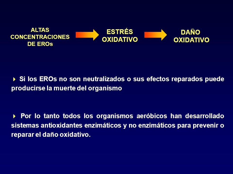 ESTRÉS DAÑO OXIDATIVO ALTAS CONCENTRACIONES DE EROs