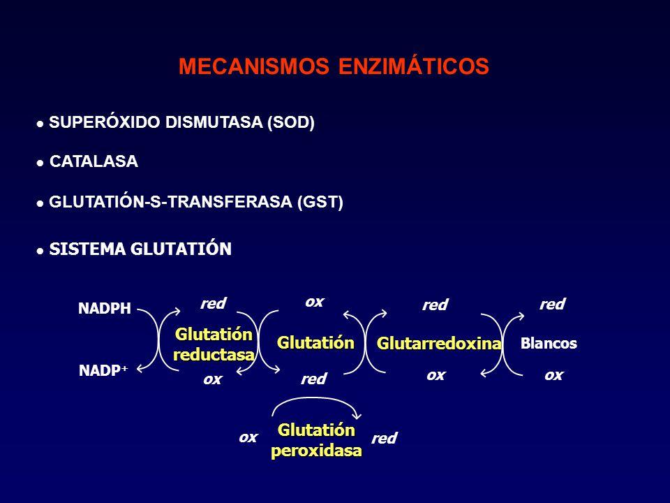 MECANISMOS ENZIMÁTICOS