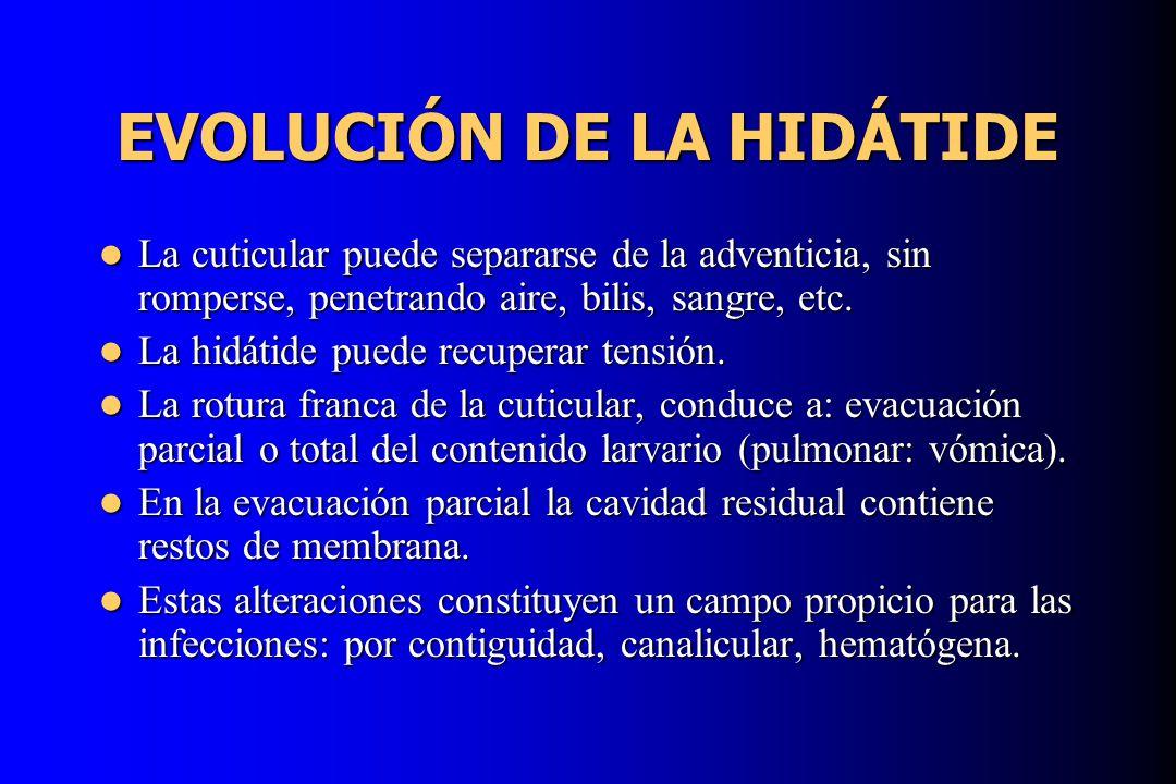 EVOLUCIÓN DE LA HIDÁTIDE
