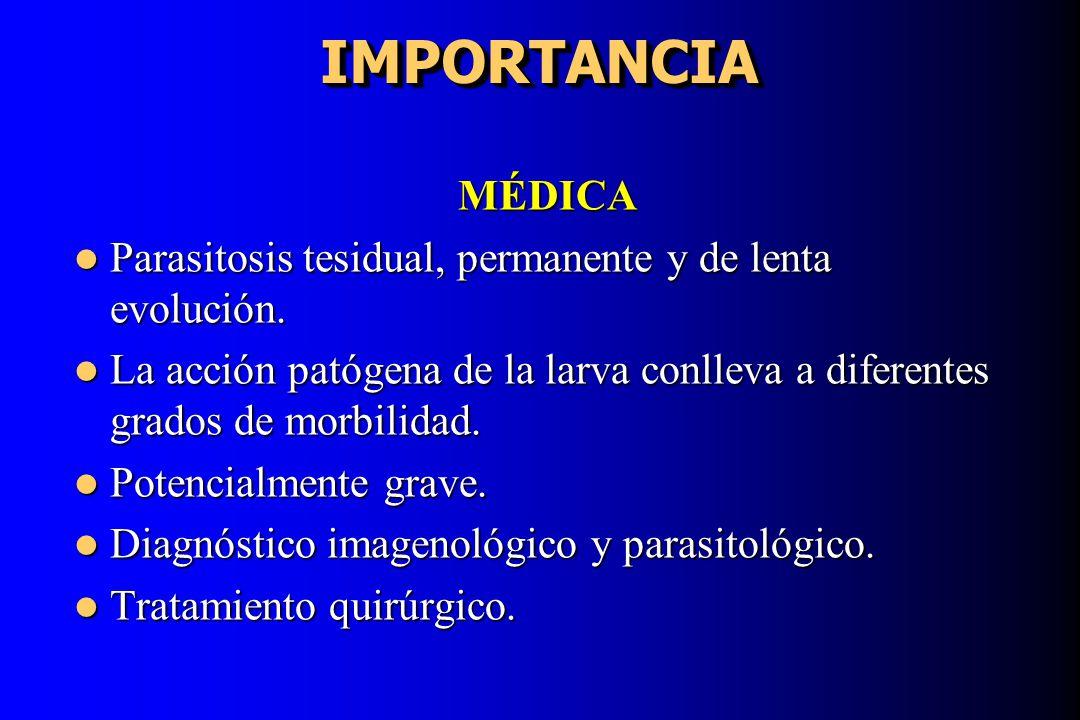 IMPORTANCIA MÉDICA. Parasitosis tesidual, permanente y de lenta evolución.