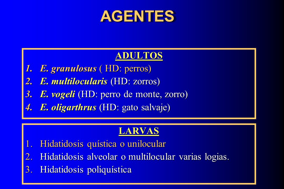 AGENTES ADULTOS E. granulosus ( HD: perros)