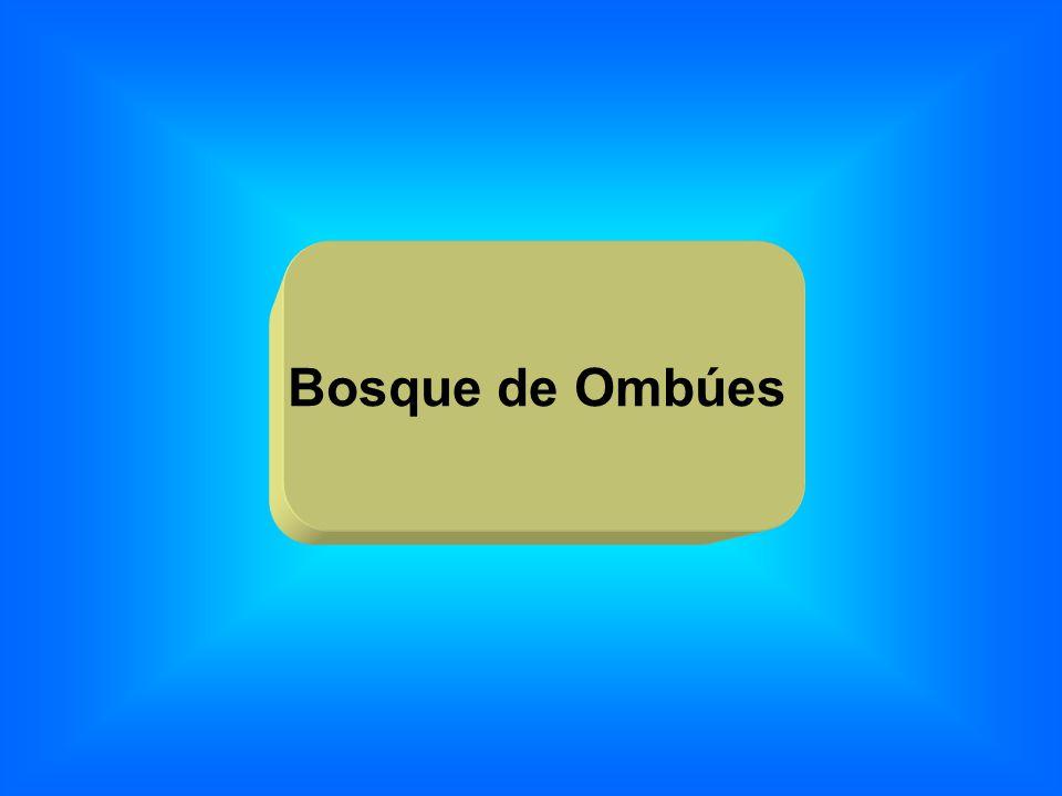 Bosque de Ombúes
