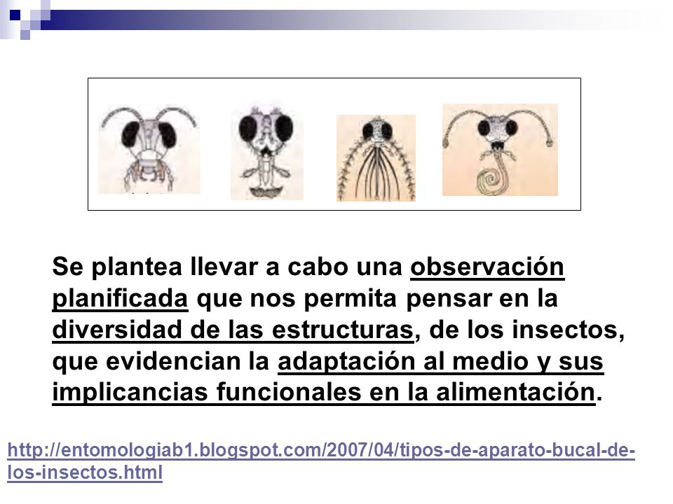 Se plantea llevar a cabo una observación planificada que nos permita pensar en la diversidad de las estructuras, de los insectos,