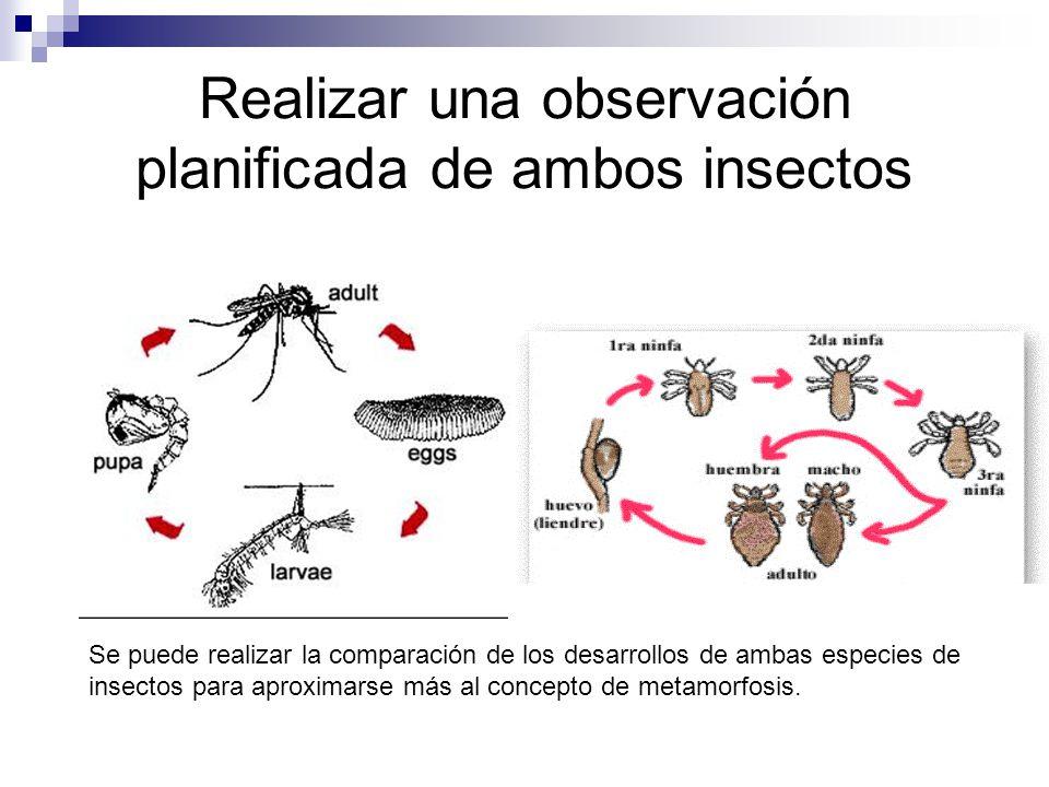 Realizar una observación planificada de ambos insectos