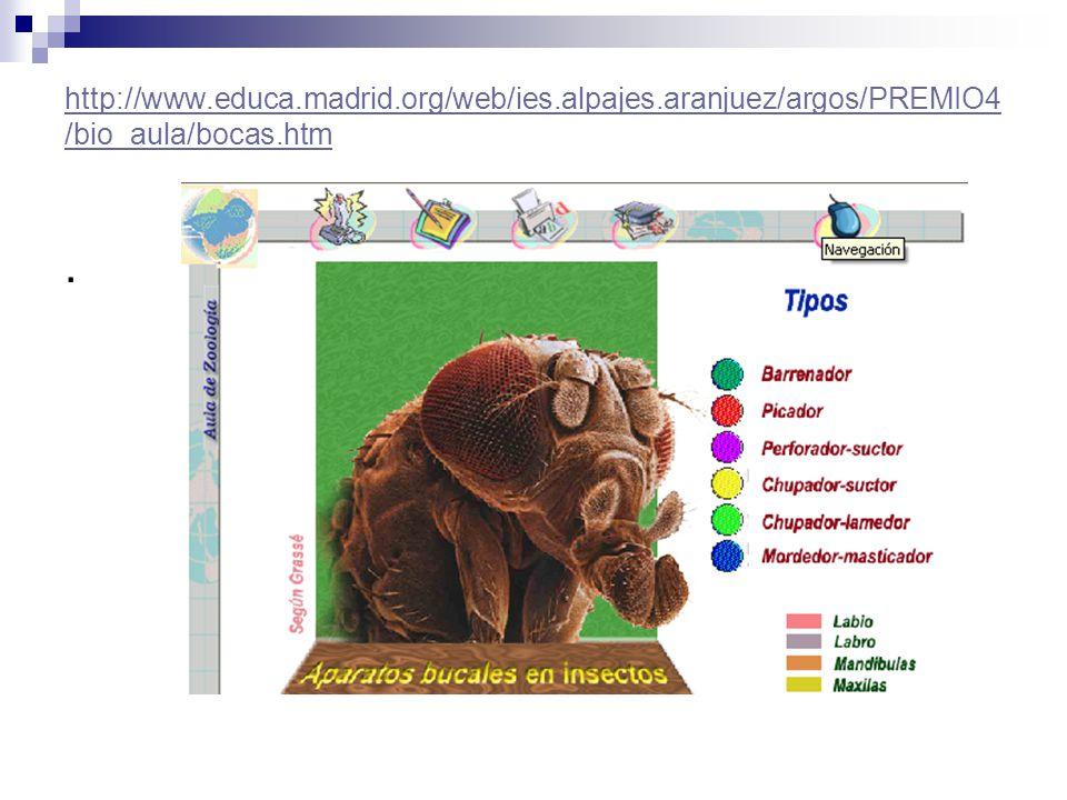 http://www. educa. madrid. org/web/ies. alpajes
