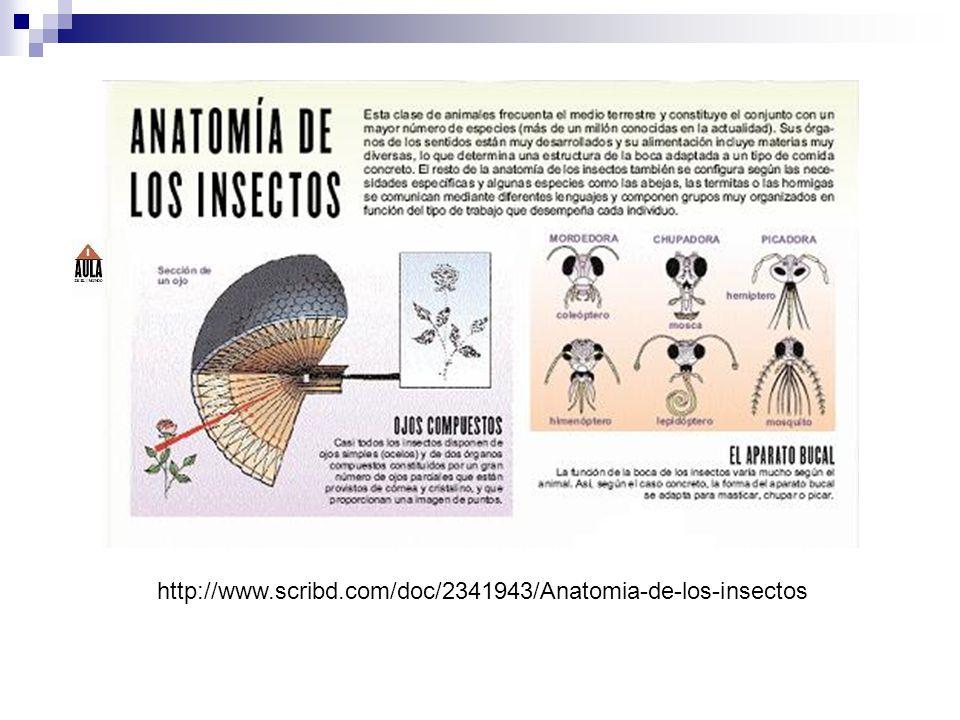 http://www.scribd.com/doc/2341943/Anatomia-de-los-insectos