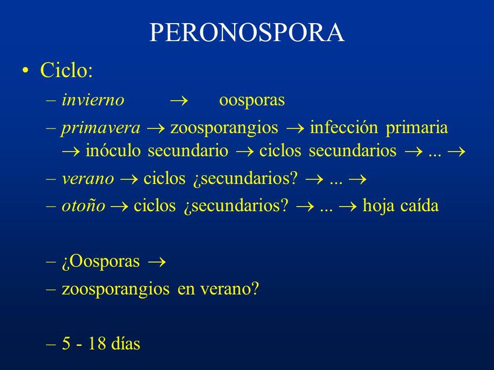 PERONOSPORA Ciclo: invierno  oosporas
