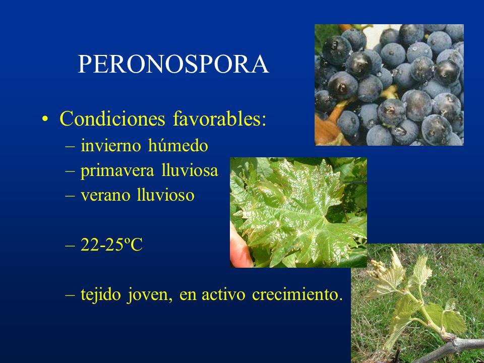 PERONOSPORA Condiciones favorables: invierno húmedo primavera lluviosa