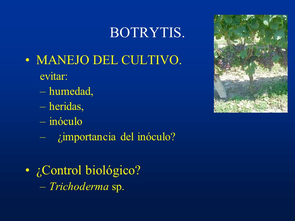 BOTRYTIS. MANEJO DEL CULTIVO. ¿Control biológico evitar: humedad,