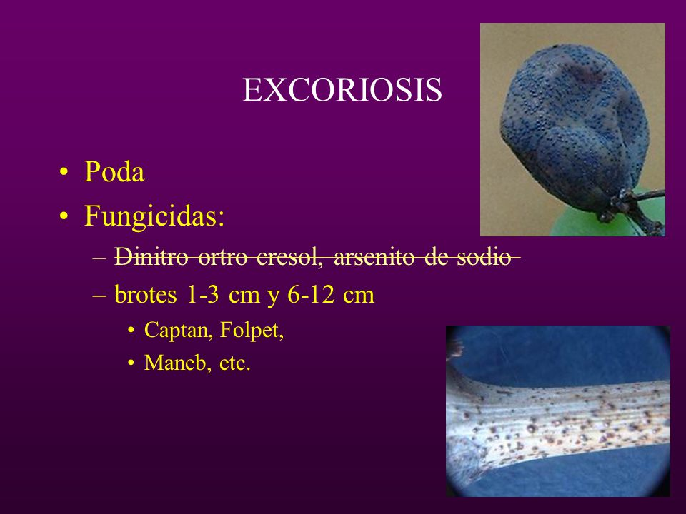 EXCORIOSIS Poda Fungicidas: Dinitro ortro cresol, arsenito de sodio