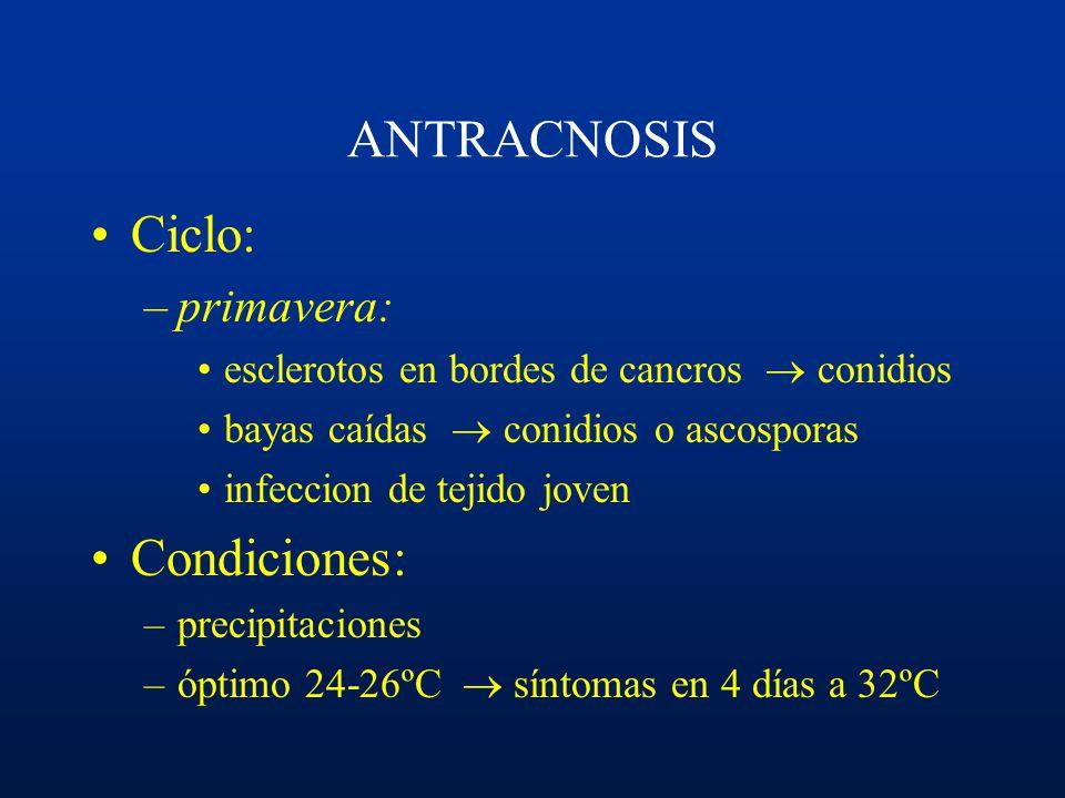 ANTRACNOSIS Ciclo: Condiciones: primavera: