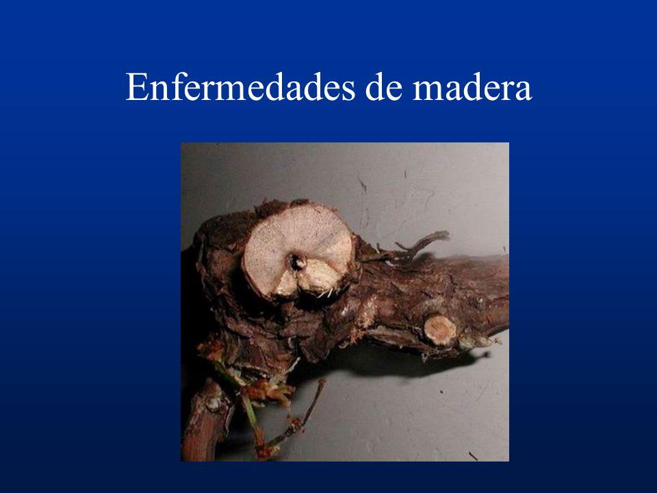 Enfermedades de madera