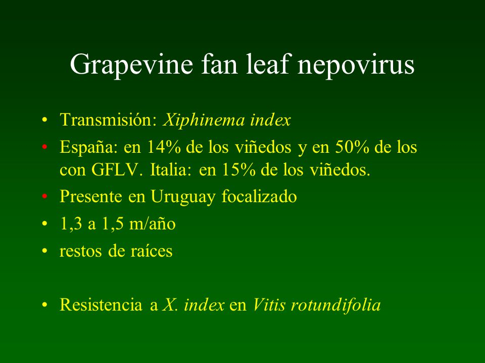 Grapevine fan leaf nepovirus