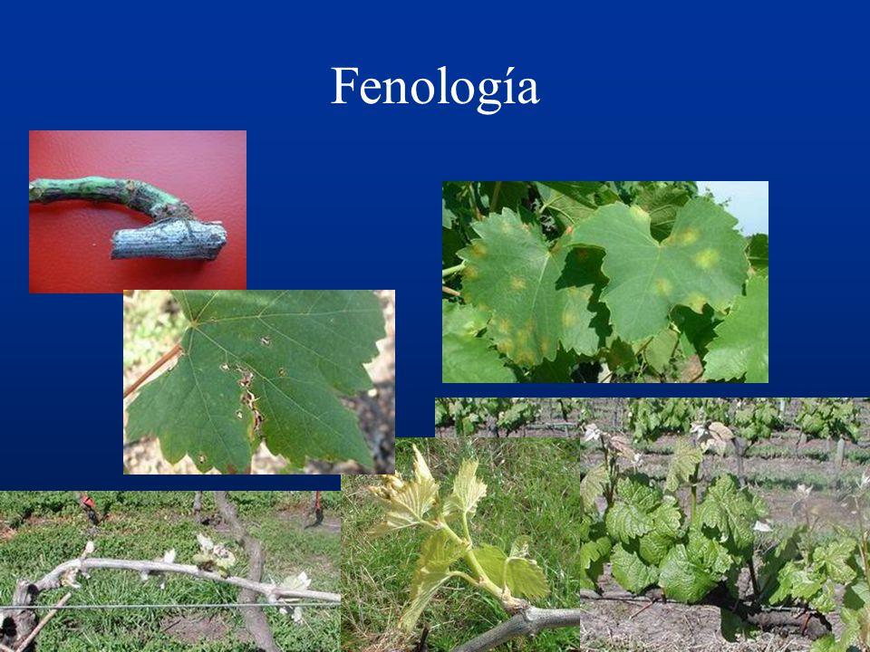 Fenología