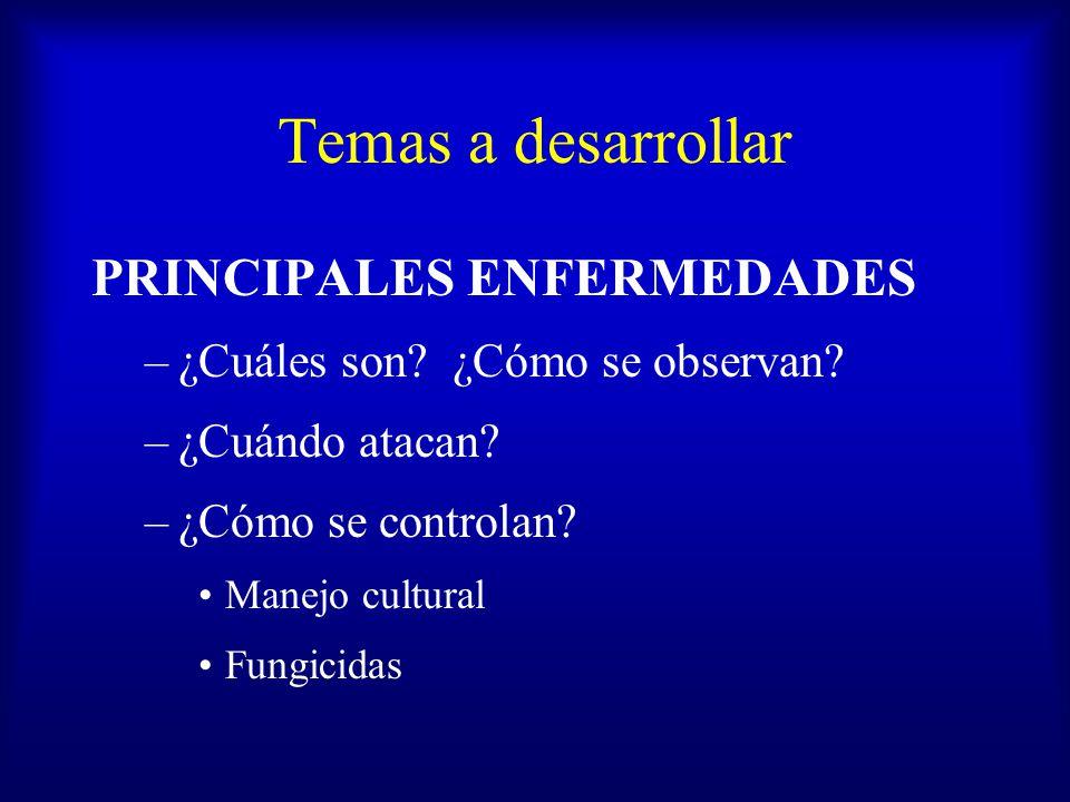 Temas a desarrollar PRINCIPALES ENFERMEDADES