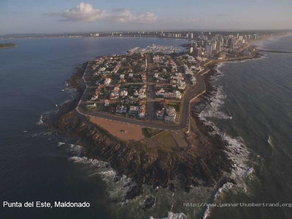 Punta del Este, Maldonado
