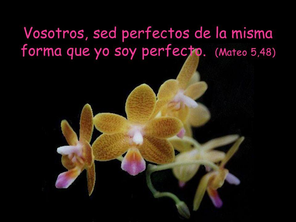 Vosotros, sed perfectos de la misma forma que yo soy perfecto