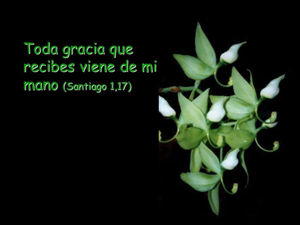 Toda gracia que recibes viene de mi mano (Santiago 1,17)