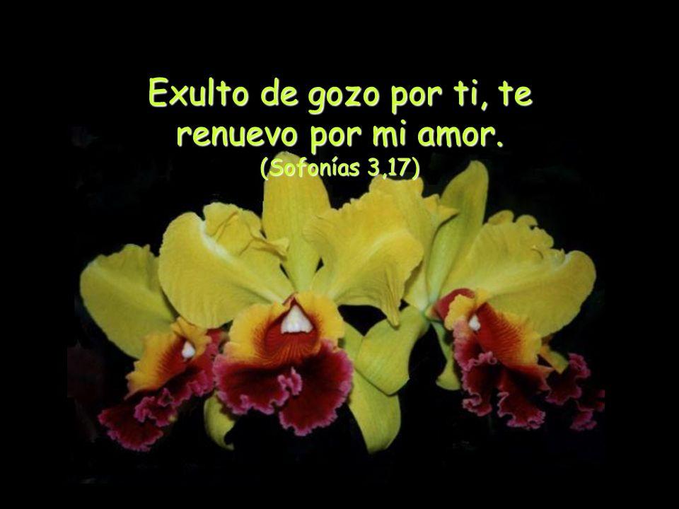 Exulto de gozo por ti, te renuevo por mi amor. (Sofonías 3,17)