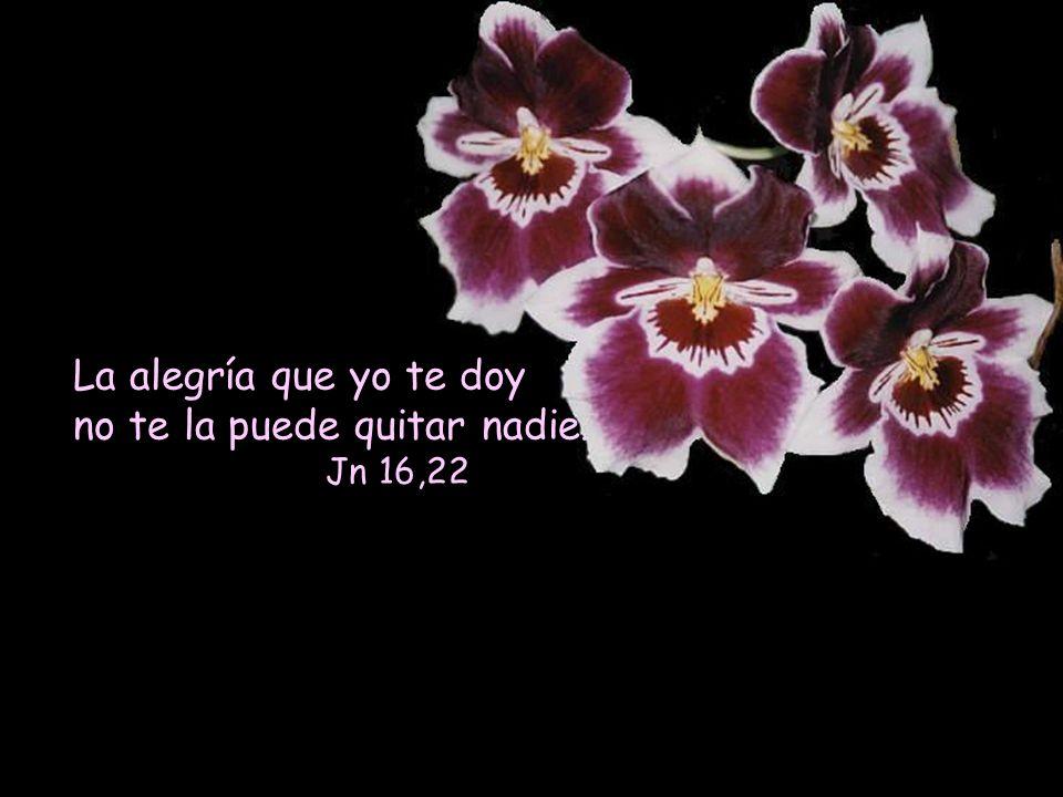 La alegría que yo te doy no te la puede quitar nadie. Jn 16,22