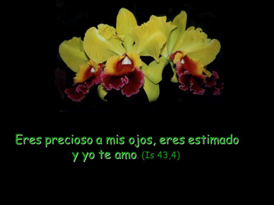 Eres precioso a mis ojos, eres estimado y yo te amo. (Is 43,4)