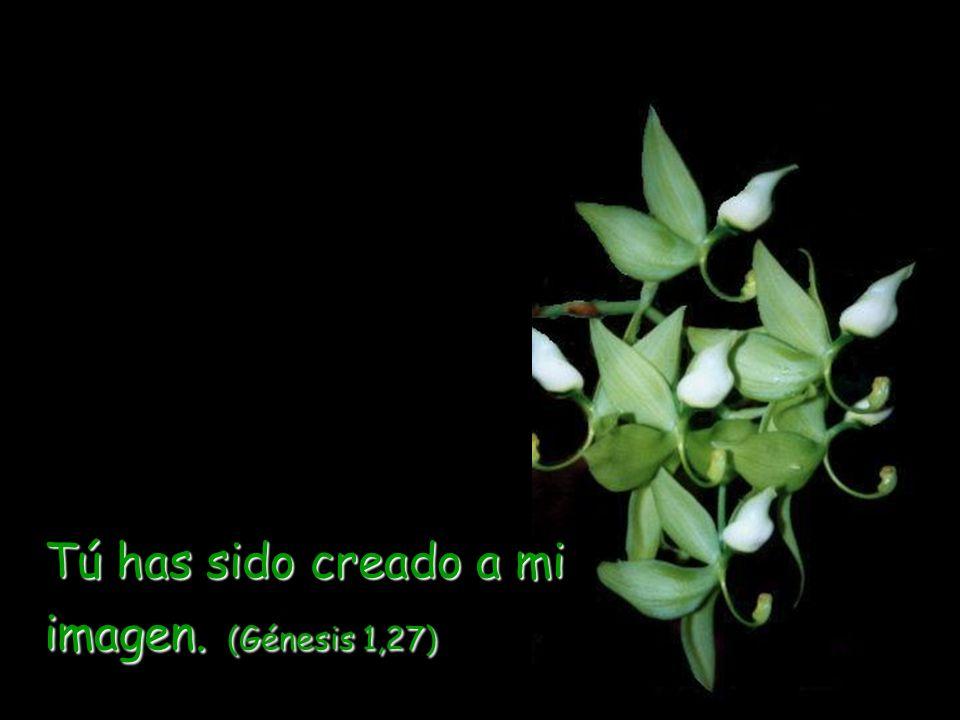 Tú has sido creado a mi imagen. (Génesis 1,27)