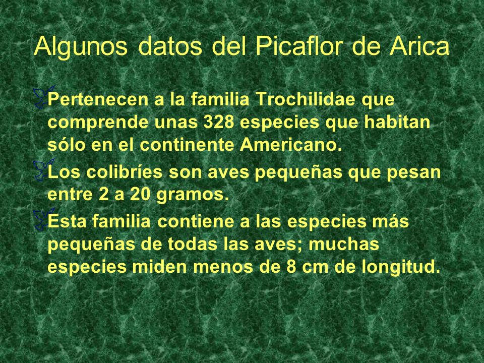 Algunos datos del Picaflor de Arica