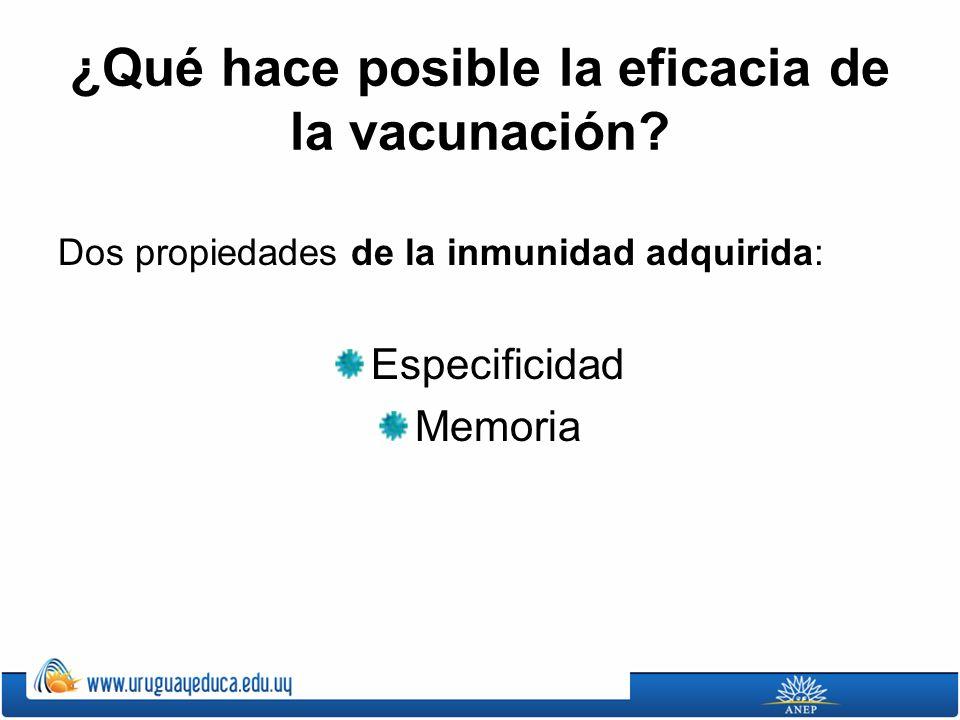 ¿Qué hace posible la eficacia de la vacunación