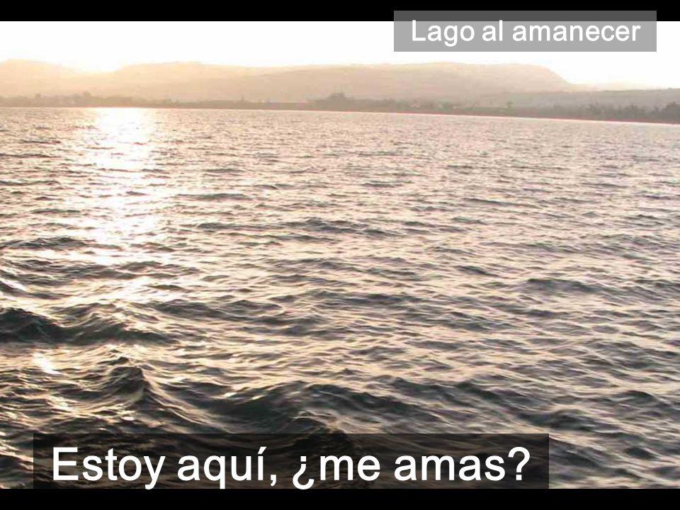 Lago al amanecer Estoy aquí, ¿me amas