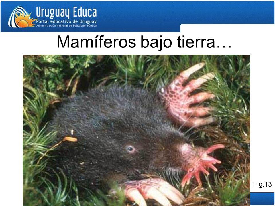 Mamíferos bajo tierra…