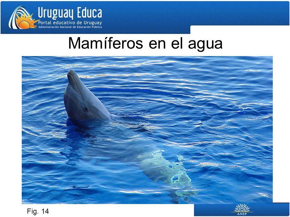 Mamíferos en el agua Fig. 14