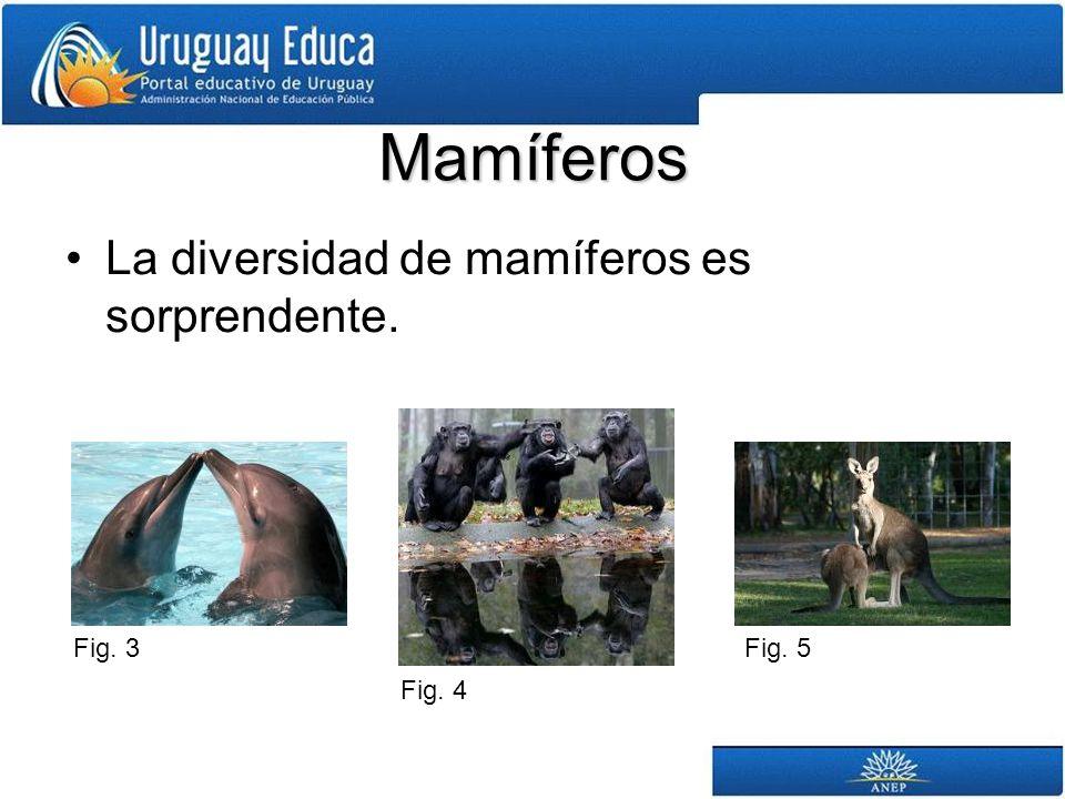 Mamíferos La diversidad de mamíferos es sorprendente. Fig. 4 Fig. 3