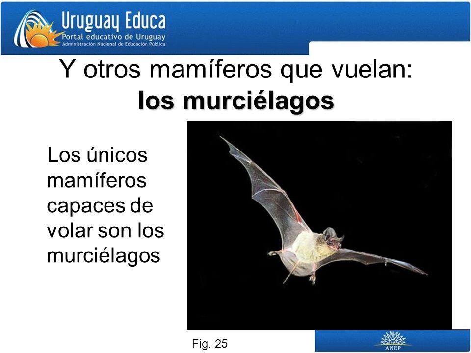 Y otros mamíferos que vuelan: los murciélagos