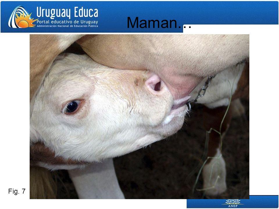 Maman… Fig. 7