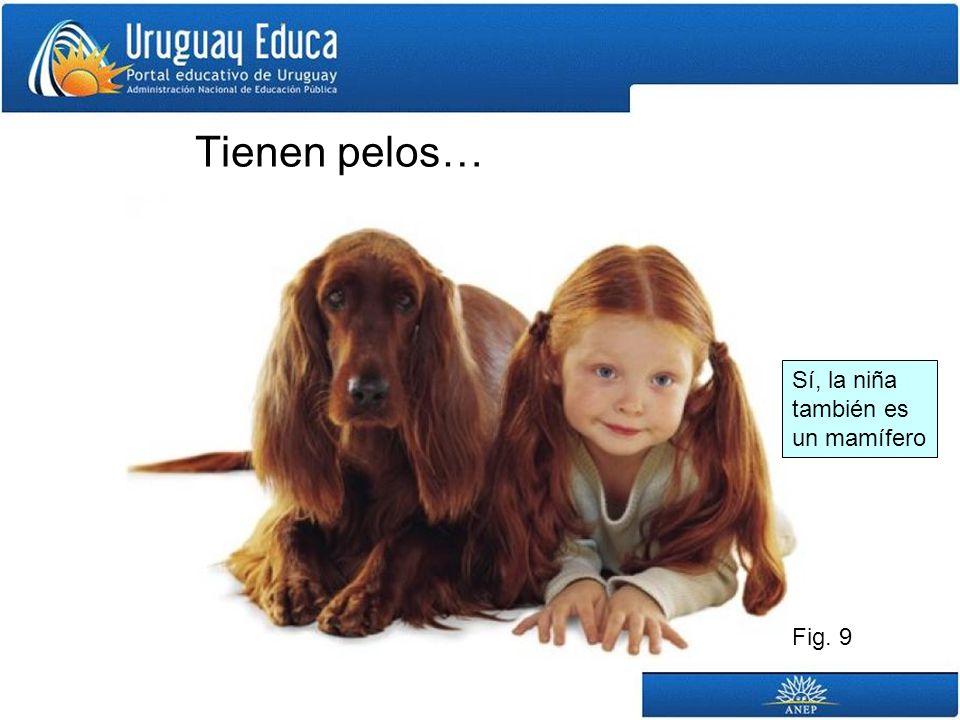 Tienen pelos… Sí, la niña también es un mamífero Fig. 9
