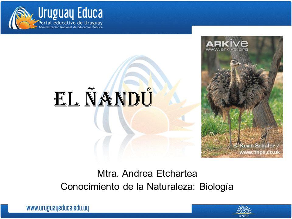 Mtra. Andrea Etchartea Conocimiento de la Naturaleza: Biología