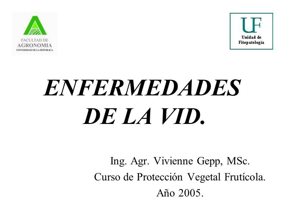 ENFERMEDADES DE LA VID. Ing. Agr. Vivienne Gepp, MSc.