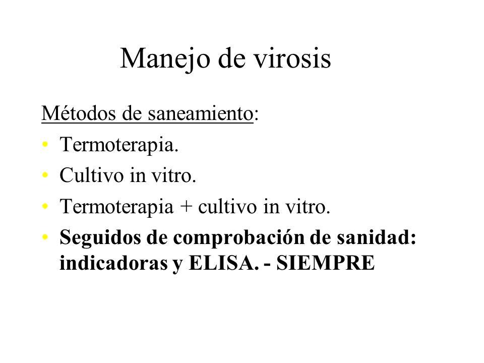 Manejo de virosis Métodos de saneamiento: Termoterapia.