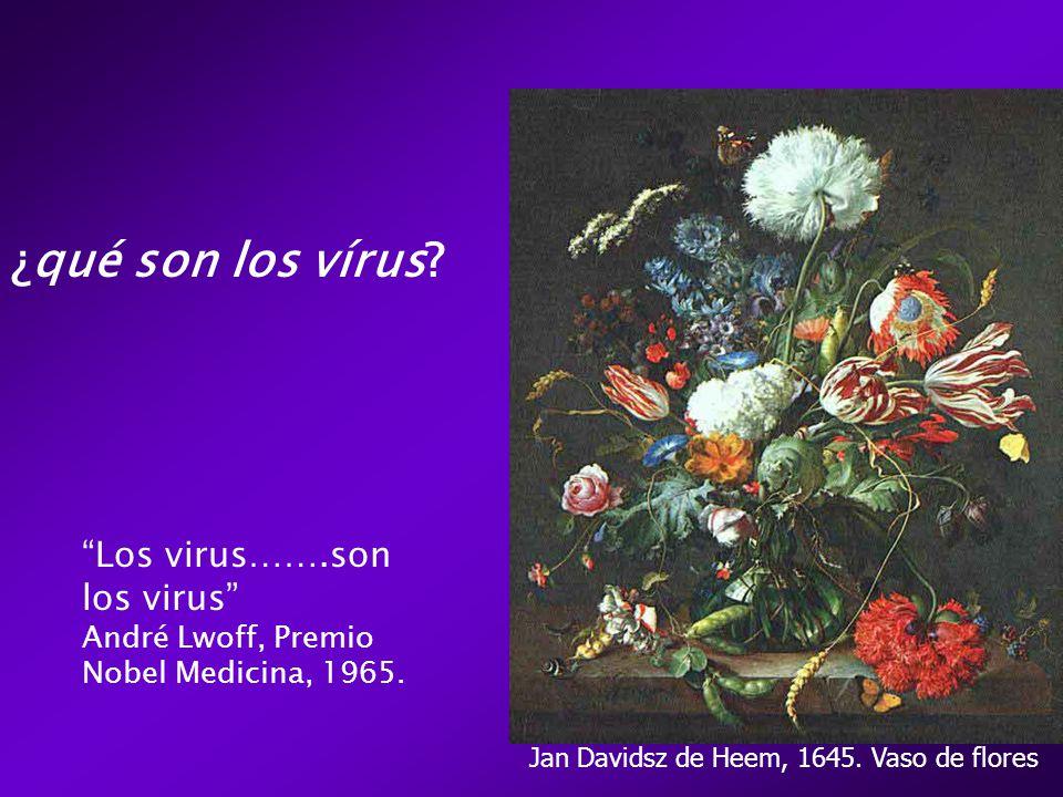Jan Davidsz de Heem, 1645. Vaso de flores