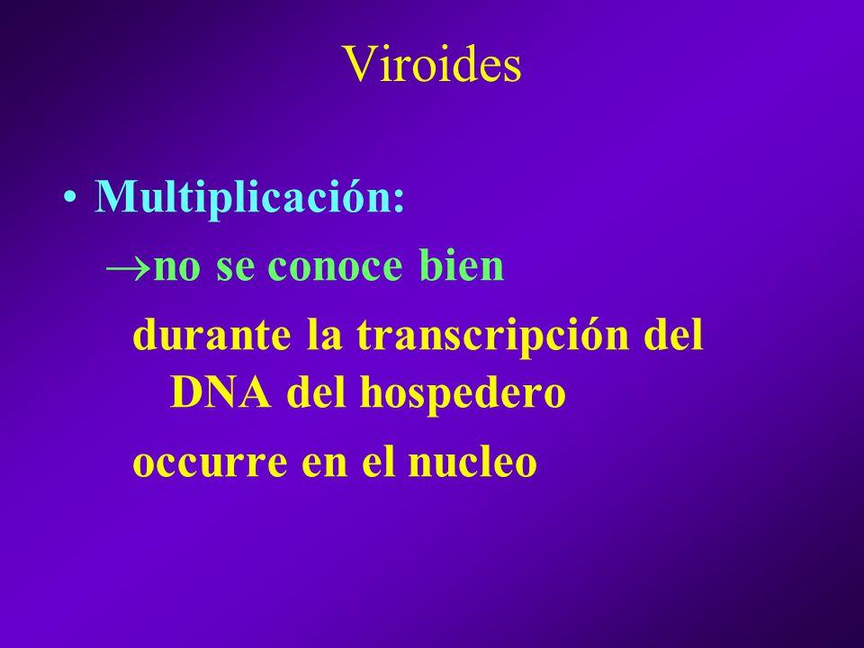 Viroides Multiplicación: no se conoce bien