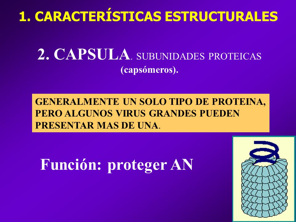 1. CARACTERÍSTICAS ESTRUCTURALES
