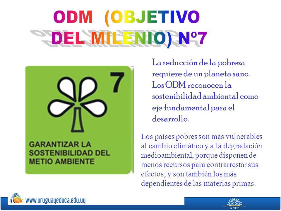 ODM (OBJETIVO DEL MILENIO) Nº7