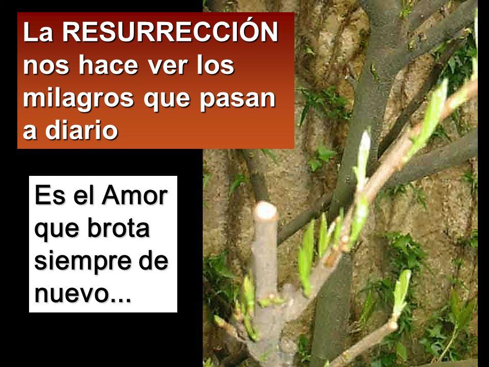 La RESURRECCIÓN nos hace ver los milagros que pasan a diario