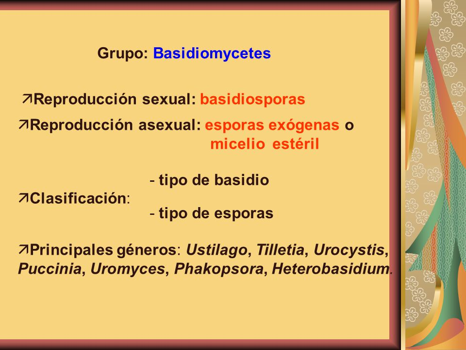 Grupo: Basidiomycetes
