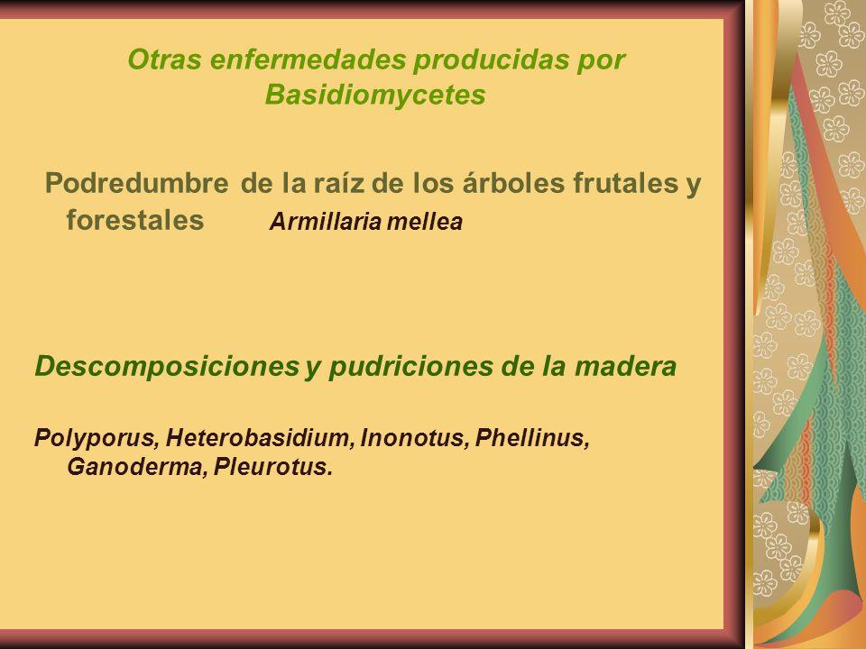 Otras enfermedades producidas por Basidiomycetes