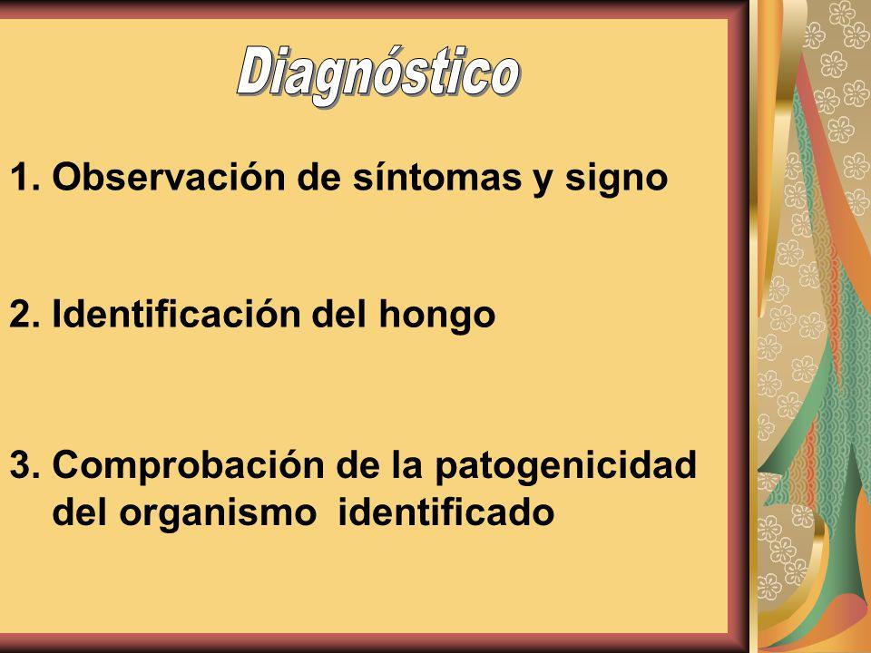 Diagnóstico 1. Observación de síntomas y signo