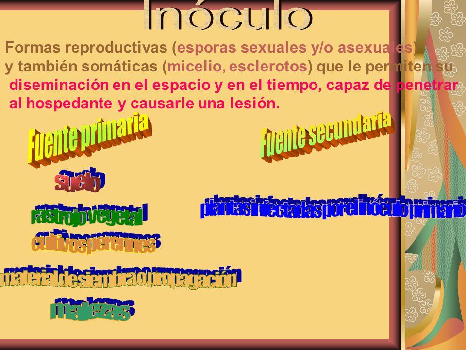 Inóculo Formas reproductivas (esporas sexuales y/o asexuales)
