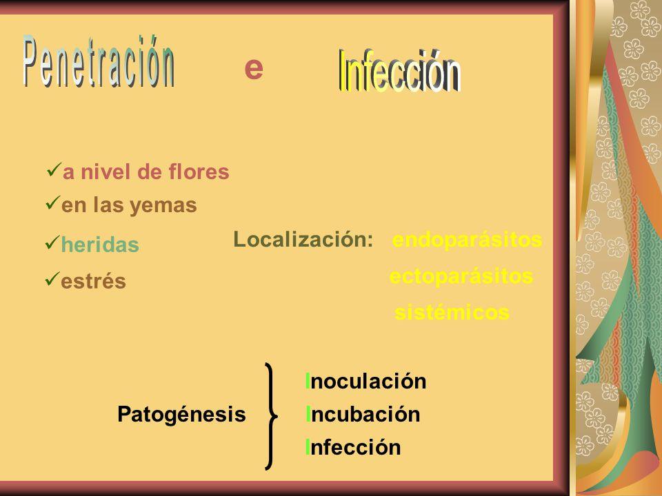 Localización:: endoparásitos