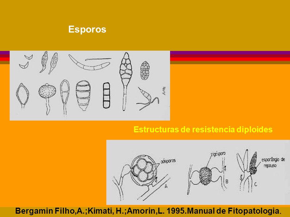 Esporos Estructuras de resistencia diploides