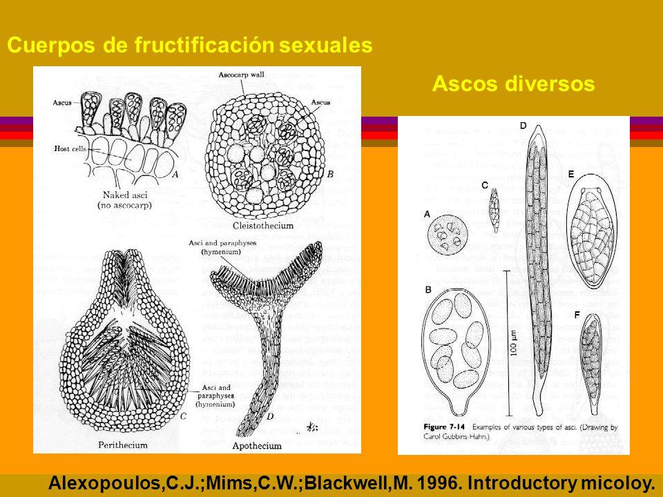 Cuerpos de fructificación sexuales